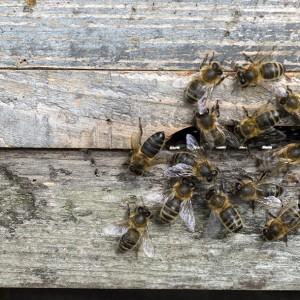 BEES2 FOR SLIDER